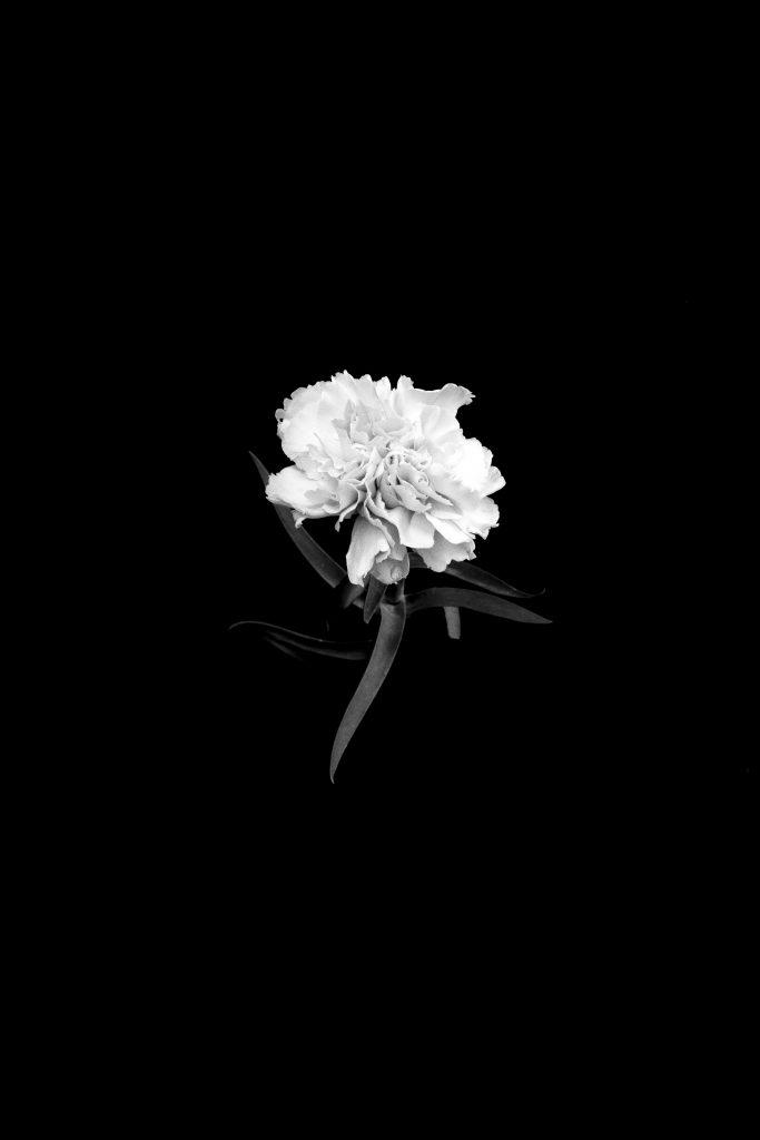 Fleurs-010696-bissd